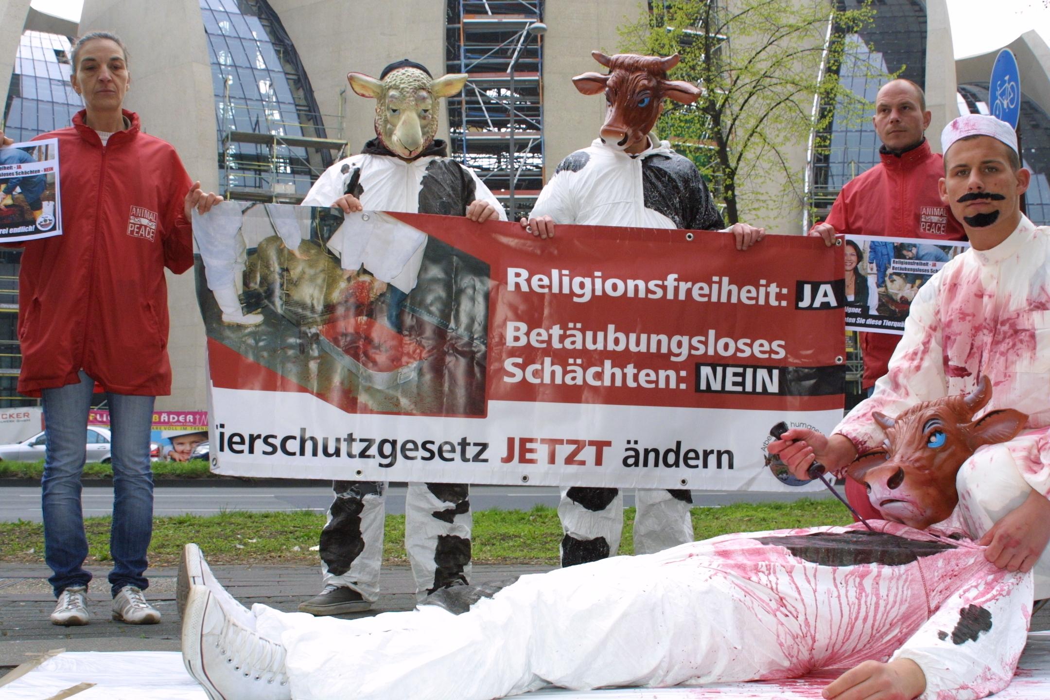 Schächten & Religionsfreiheit – ANIMALPEACE
