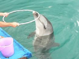Delfinarien - Ein Mordsvergügen (DTV)