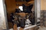 Hunde - Animal Hoarding ist eine krankhafte Störung