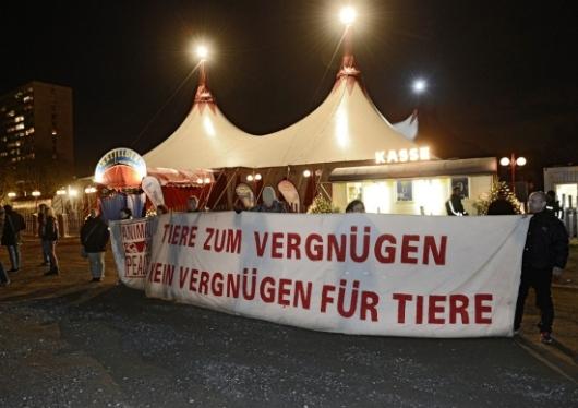 Zirkus Infos