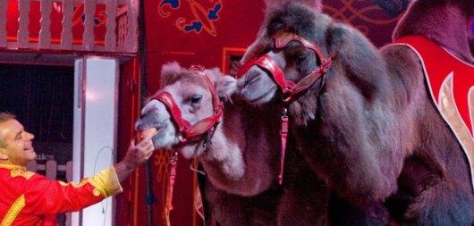 Gegen Tiernummern des Circuses Paul Busch demonstrieren Tierschützer in Duisburg. - Foto: IKZ
