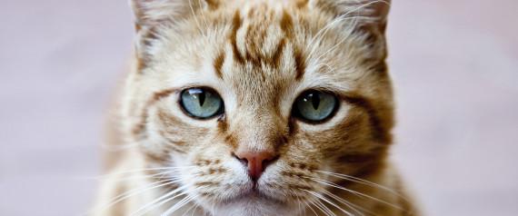 Tiere – durchdacht und klug, nicht süß – HUFFPOST