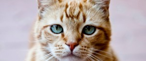 Portrait of ginger cat